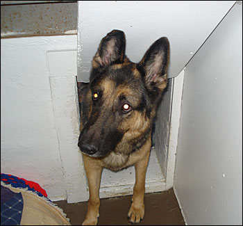 german shepherd kennel